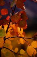 Листья_Трава