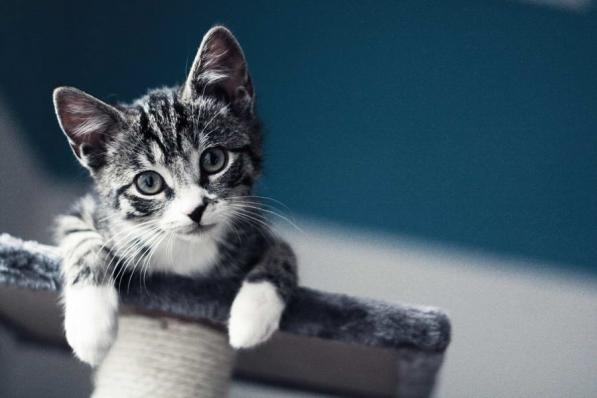 Кошки_Собаки